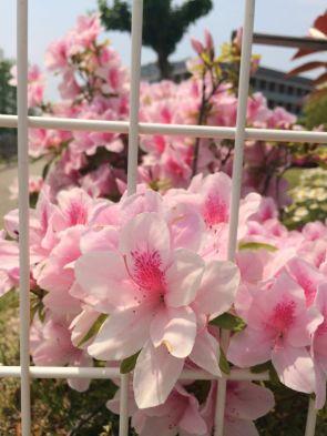 春③.JPG